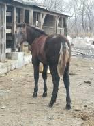 Лошади.