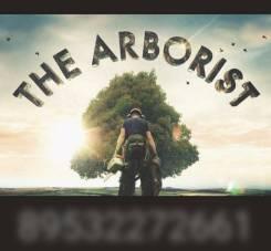 Спилим дерево любой сложности, ветки, кронирование. Арборист.