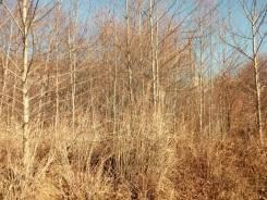 Продам земельный участок в районе Рица. 1 231кв.м., собственность, от агентства недвижимости (посредник). Фото участка