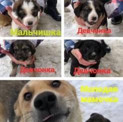 Собаки.