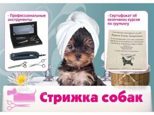 Стрижка собак (Цена символическая - 500р. ) - район Толстого, 30