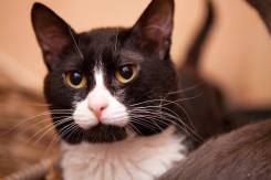 Передержка кошек в домашних условиях