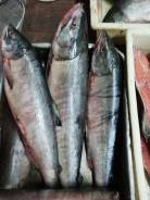 Продам красную рыбу