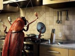 Уничтожение тараканов, клопов и муравьев