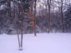 Шикарный лесной участок 51 сот собственность за Лексус Центром. 5 100кв.м., собственность, электричество, вода, от частного лица (собственник). Фото...