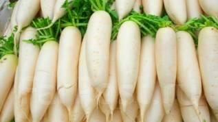 Работа в Корее, остров Чеджу, для женщин! Сортировка овощей!