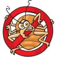 Уничтожение насекомых (Тараканы, Клопы, Блохи, Муравьи).
