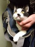 Котёнок ищет новых хозяев
