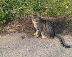 Кот молодой крысолов