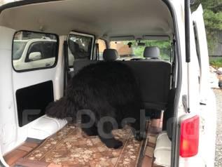 Перевозка крупных домашних животных.