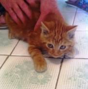Отдадим рыжего котеночка-найдёныша в заботливым людям