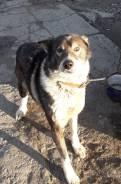Ищет хозяев умный, надежный пес для охраны дома, подворья