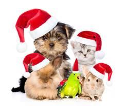 Ветеринарная Клиника! Акции для кошек и собак!