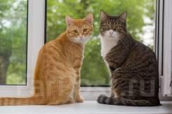 Гостиница для кошек на дому