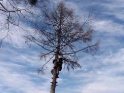 Спил валка снос подрезка деревьев веток корчевание. вывоз.