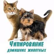 Ветеринары.