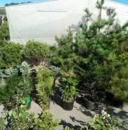 Садовник. Средне-специальное образование, опыт работы 16 лет