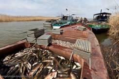 Рыбохозяйстивенное предприятие (промышленное рыболовство, аквакультура)