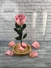 Розы.