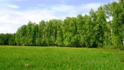 Продается земельный участок 25 соток в Московской обл. Чеховский р-н. 2 500кв.м., собственность, электричество