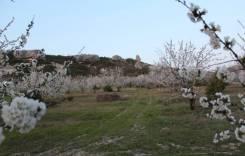 Участок черешневый сад с. Красный мак. 71кв.м., собственность, электричество