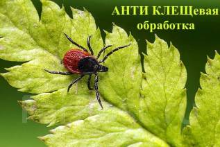 Акарицидная обработка! Уничтожение клещей, короедов, комаров, мух, тли