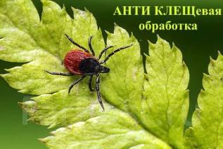 Акарицидная обработка! Уничтожение клещей, короедов, комаров, шершней, ос