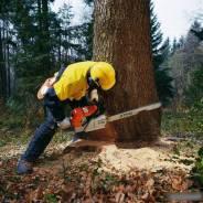 Вырубка . Пилим деревья, обрезаем ветки. удаление пней.
