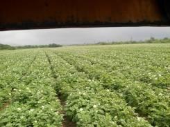 Продаю крестьянско(фермерское ) хозяйство