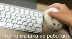 Услуги Репетитора