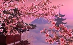 Работа в Японии танцовщица+ хостесс