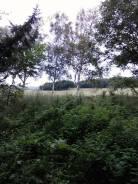 Продаем земельный участок в с. Григорьевка. 9 969кв.м., собственность. Фото участка