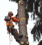 Спилим Любое дерево у вас на Участке , СРУБ Любой Сложности