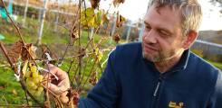 Экскурсия на Майхинское виноградарское хозяйство!
