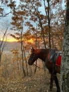 """Природная фотостудия - Скала """"Роза ветров"""", закат, лошади."""