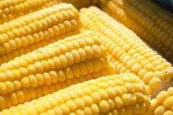 Кукуруза.