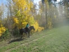 Обучаю на лошадке