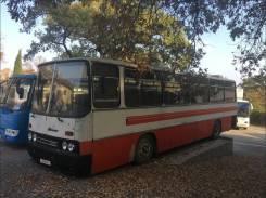 Ikarus 256. в Ялте, 50 мест