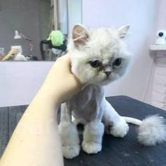 Стрижка кошек. Без наркоза! Зоосалон Район авангард - гайдамак