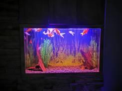 Обслуживание аквариумов, террариумов. Под заказ
