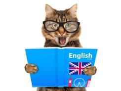 Английский для взрослых и школьников Skype. Первое Занятие Бесплатно