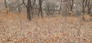 Седанка 20соток ижс по ул. Семирадского р н Седанкинского водохранилища. 2 000кв.м. Фото участка