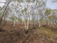 """Продам земельный участок с/т """"Чистые пруды"""". 1 000кв.м., собственность. Фото участка"""