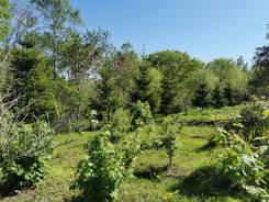 Отличный участок с Ёлками, с плодовыми кустами и деревьями. 992кв.м., собственность. Фото участка