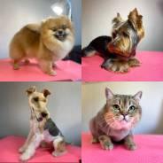 Домашние, модельные стрижки/груминг собак и кошек всех пород !
