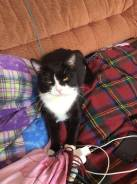 Пропал котик Тиша полненький черно-белый, короткошерстный.