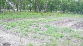 Продам земельный участок. 1 000кв.м., собственность, электричество. Фото участка