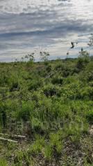 Продам земельный участок 42 сотки в Мичуринском (Виноградовка). 4 227кв.м., собственность, электричество