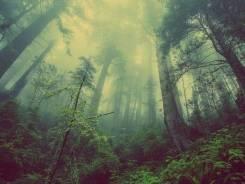 Квест «Выживание в лесу»