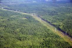 Вальщик леса, лесоруб. ООО СК Прогресс